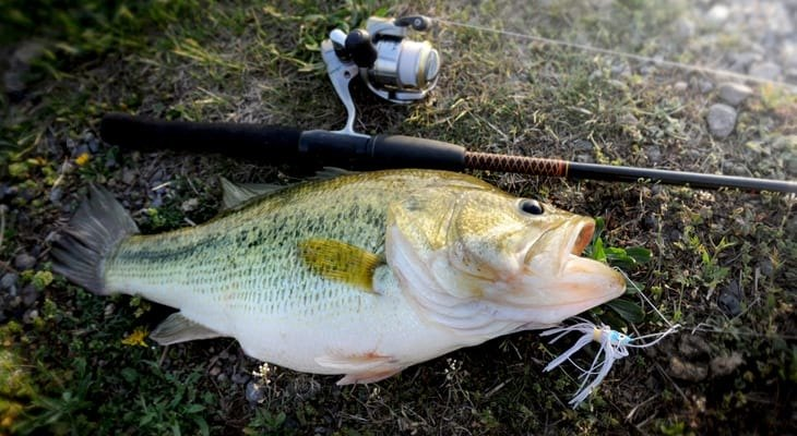 Best Baitcasting Rods for Bass