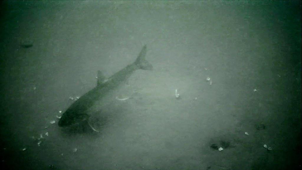 Ice Fishing Cameras